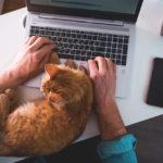 ペット可の賃貸不動産物件が増えている